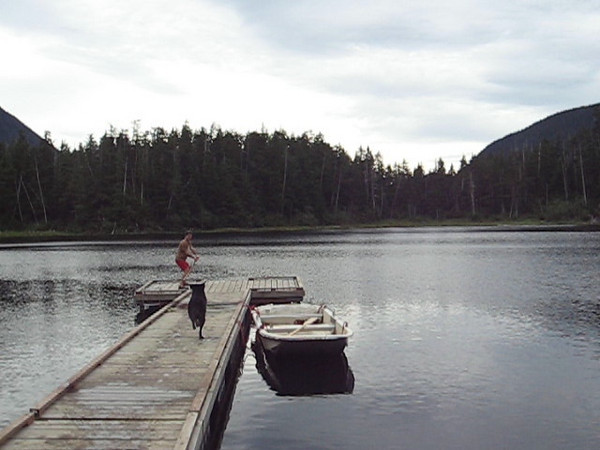 Video of Coho jumping off dock. Click to watch.