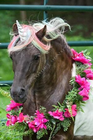 Quincy the Unicorn 072320