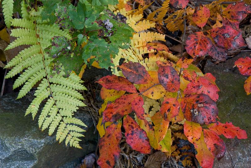 Mixed Autumn