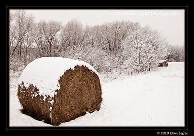 Dallas Record Snow Feb 11 2010