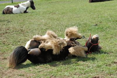 Appleby Horse Fair 2010