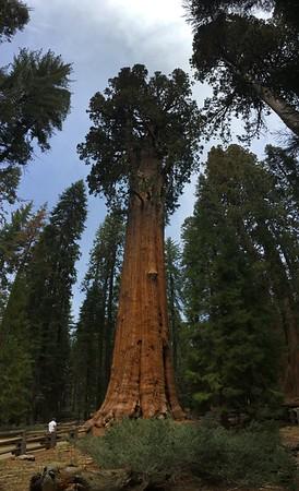 Sequoia NP 05-2018