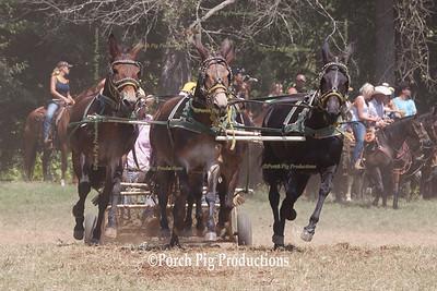 Saturday Race Mules