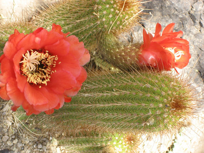 Arizona Trip 2007 Overview