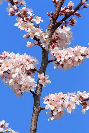 Spring blooms, Newport News, VA. © 2007 Kenneth R. Sheide