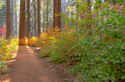 Calaveres Big Trees National Park