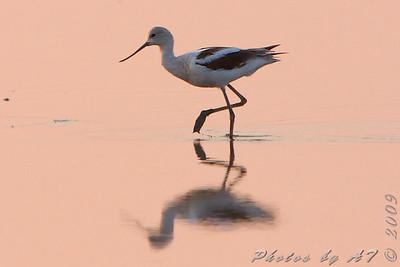 2009 Birding