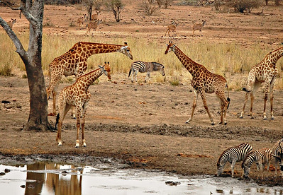 South Africa 2011