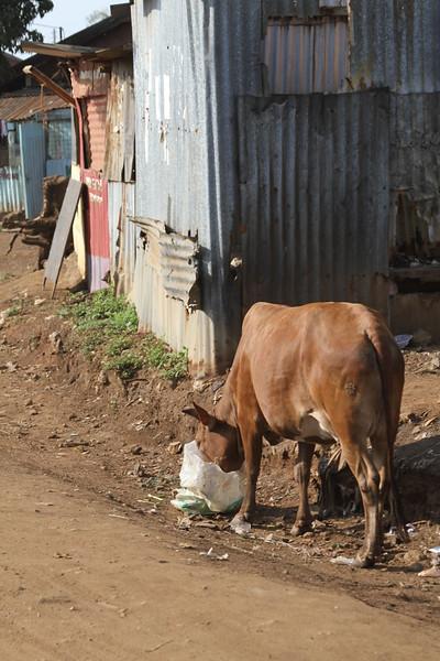 Kenya Part1 '15 523.JPG