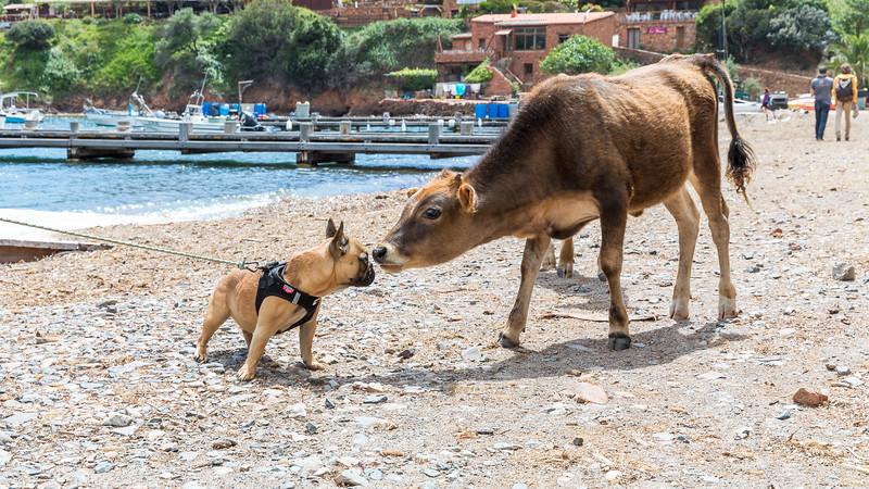 Re-Anh, 8 mois, a trouvé une bonne copine de jeux sur la plage - 8 month old Re-Anh found a great playmate on the beach (Girolata - Sevinfuori - Haute Corse)