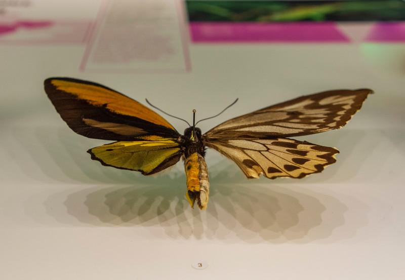 Male-female-butterfly.jpg