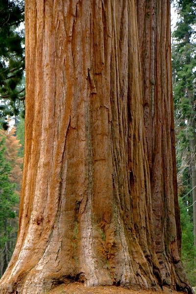 California Day 6 Sequoia 05-30-2017 46.JPG