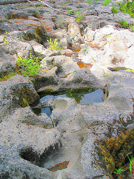 Rogue River (33713155).jpg