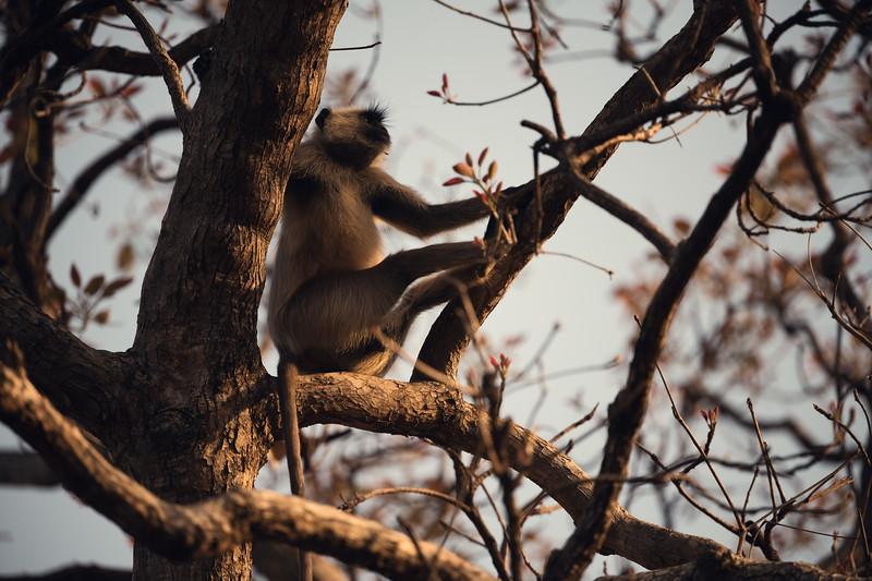 India_April_2019-376.jpg
