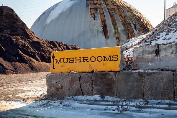 Mississippi Mushrooms