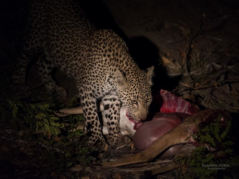 Leopard (Tiyane), Sabi Sands (EP), SA, Oct 2016-7.jpg