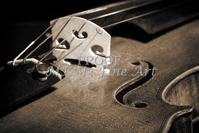 Violin Black and White Photography Prints