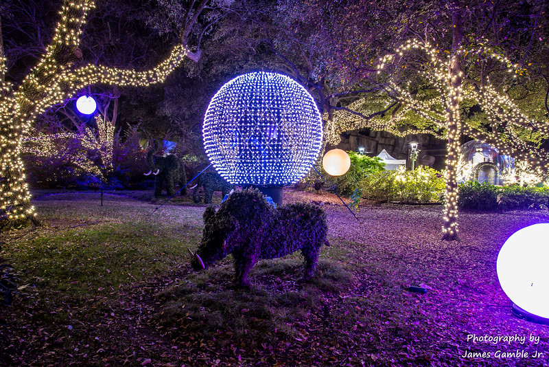 Houston-Zoo-Lights-3133.jpg