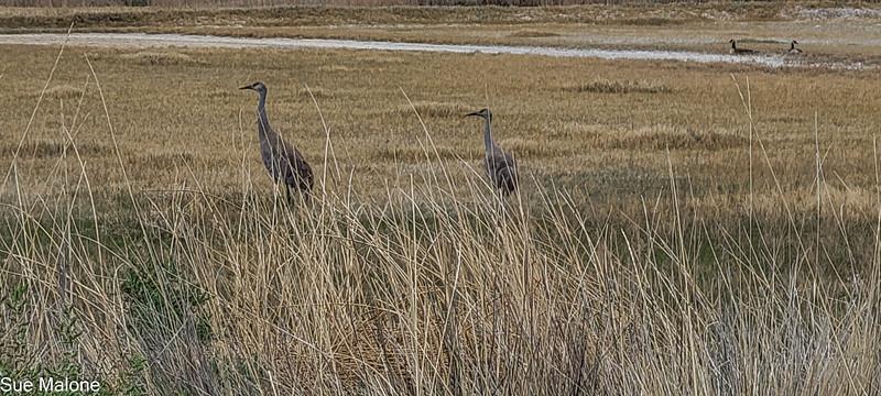 05-19-2021 Summer Lake Wildlife Refuge-12.jpg