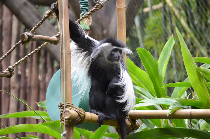Disney Animal Park March, 2013-DSC_0429-Edit-065.jpg