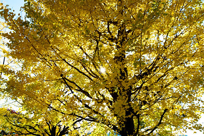 Kyoto Nov 2012