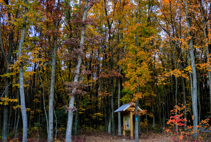 autumn 2015 - welsh Mountain nature preserve - trails at parking lot(p).jpg