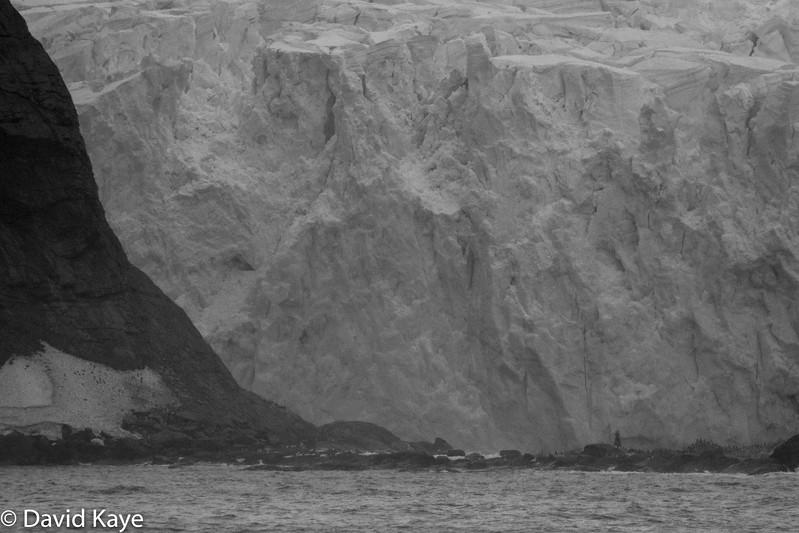 Day 7 - Point Wild, Elephant Island