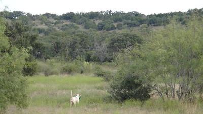 Pedernales River Ranch