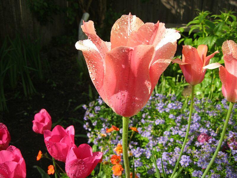 garden-2003-05-0150_std.jpg