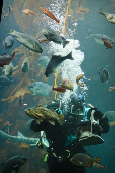 Monterey Bay Aquarium-2579.jpg