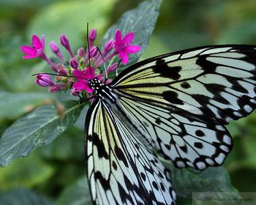 2009-03 Butterflies