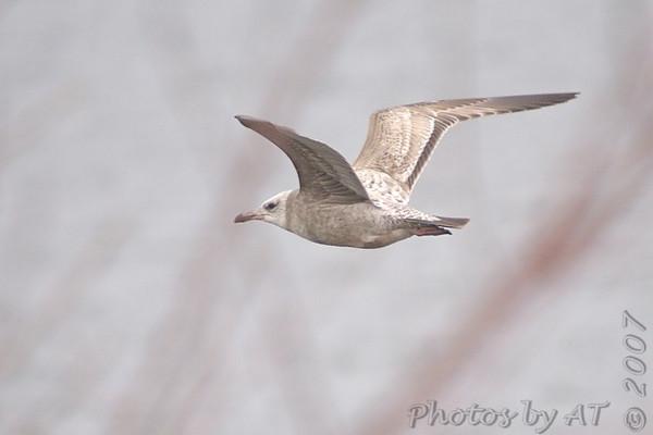2007-01 Riverlands Migratory Bird Sanctuary