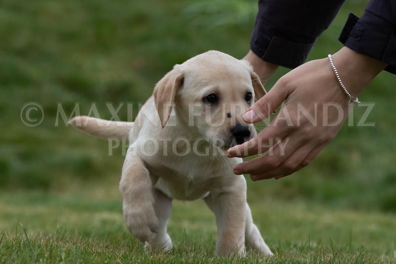 Weika Puppies 24 March 2019-6695.jpg