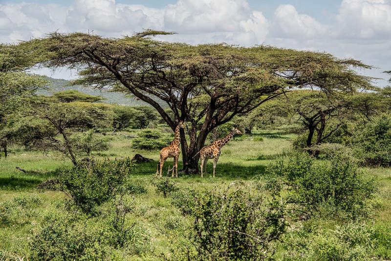 Samburu (45 of 70).jpg