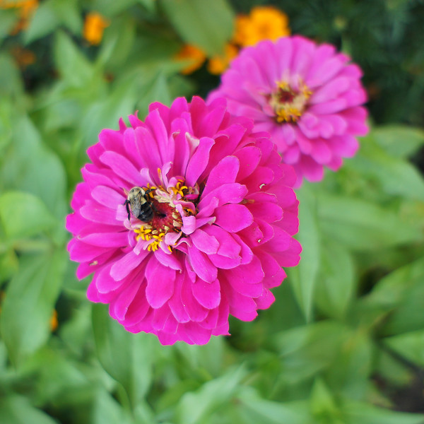 Flower with bee.jpg