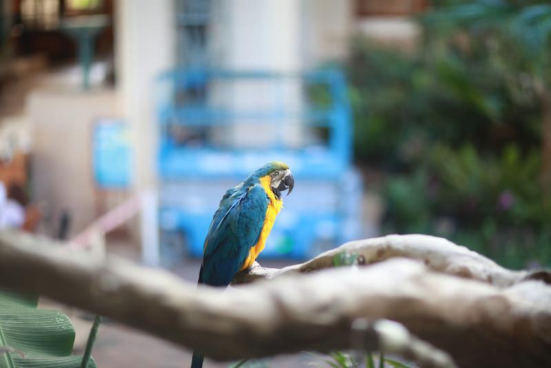 Kauai_D5_AM 241.jpg