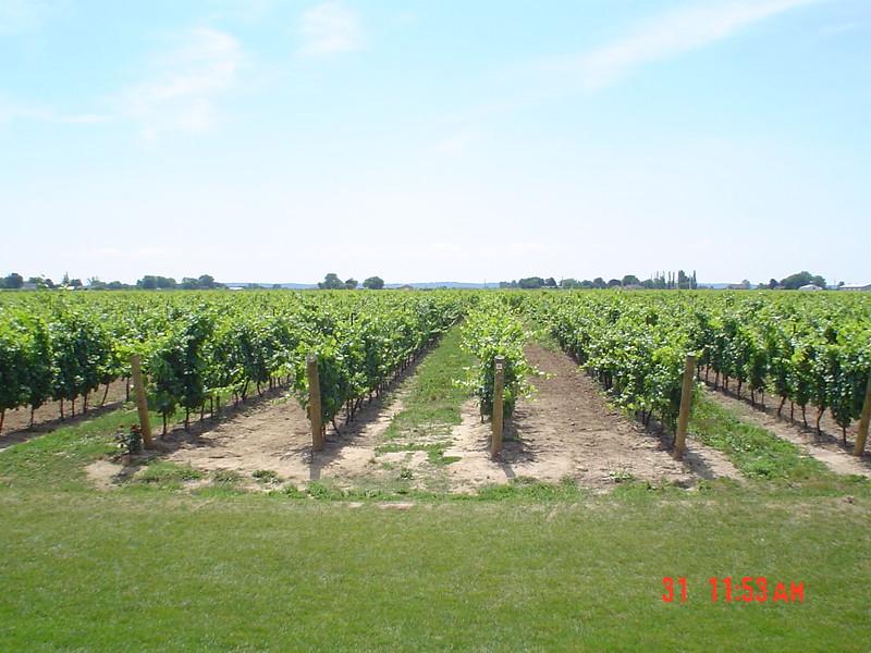 vineyard_1808143251_o.jpg