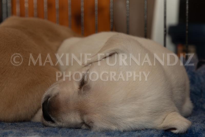 Weika Puppies 2 Mar 2019-8499.jpg