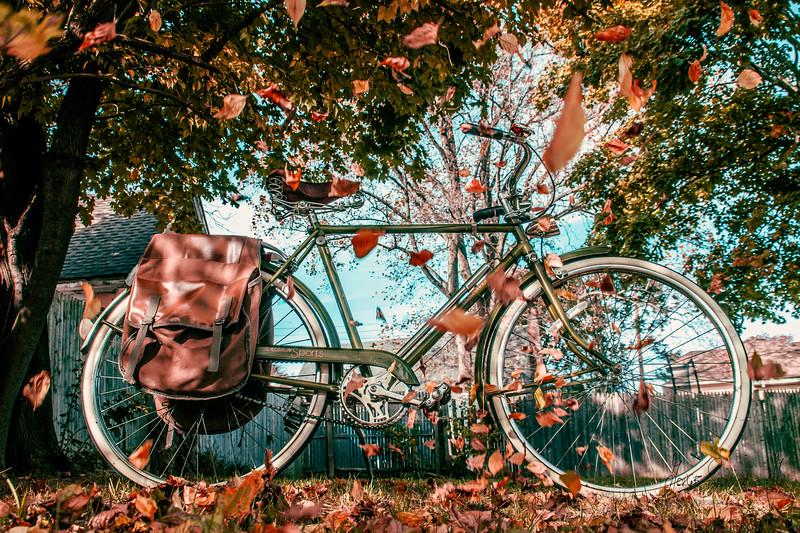 bici pachuko IMG_5806.jpg