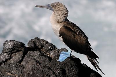 Galapagos Islands 05/19/2011