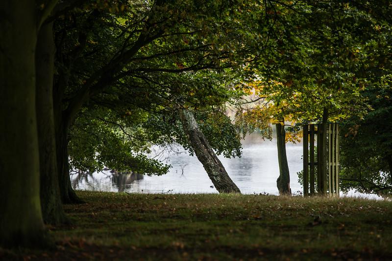 Richmond Park -9708.jpg