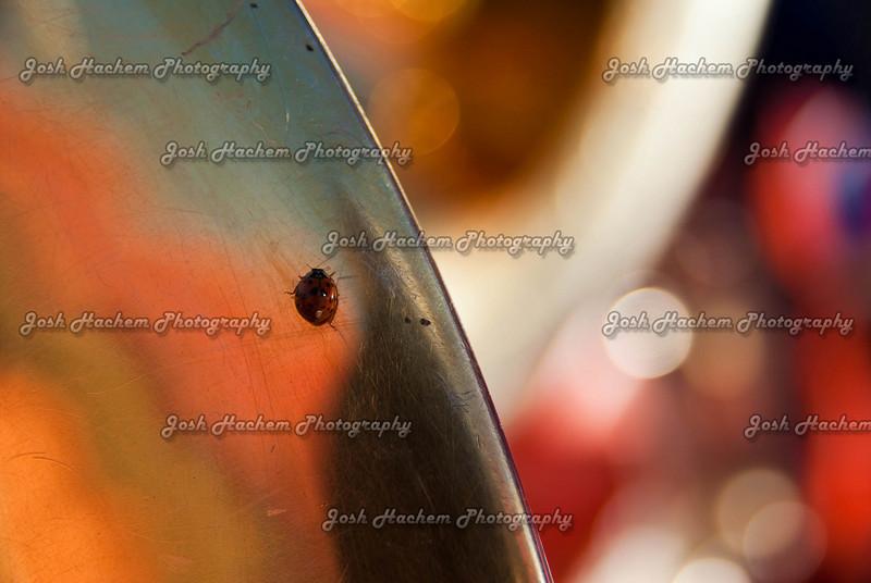 11.28.2009 KC_Trip 7622.jpg