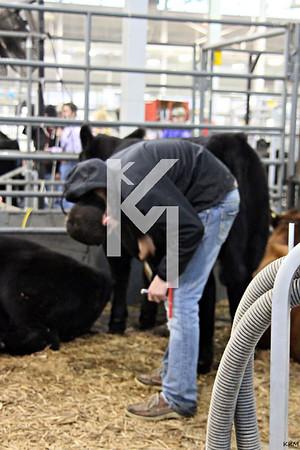 Hoosier Beef Congress - Day 3