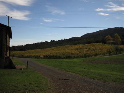 Fall colors in vineyard - November 2010