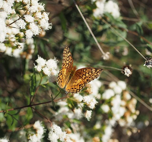 fall-butterfly_11031230215_o.jpg