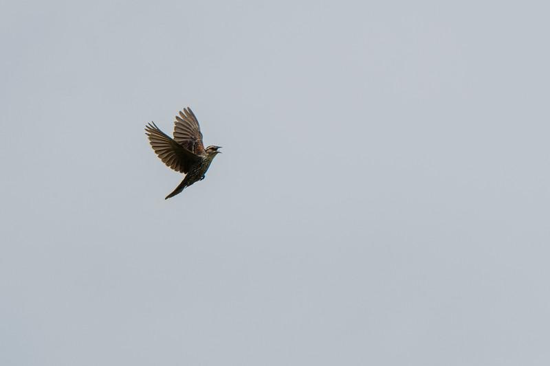 2019.06.07-Birds-18.jpg