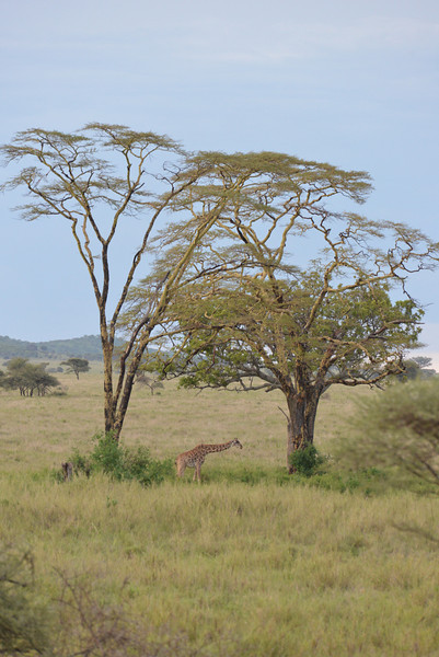 East Africa Safari 298.jpg