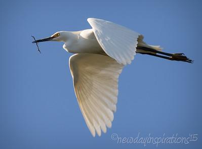 Egrets & Heron
