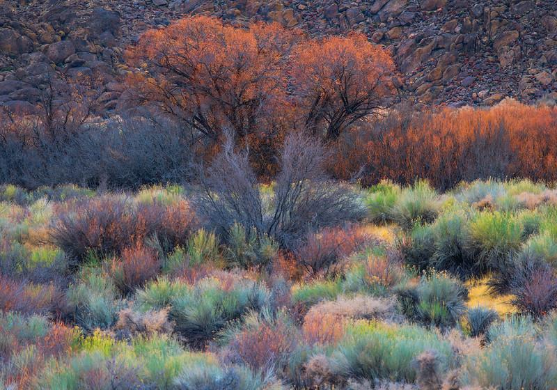 Cali Grass 2 copy.jpg
