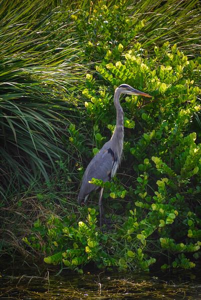 Everglades-24.jpg